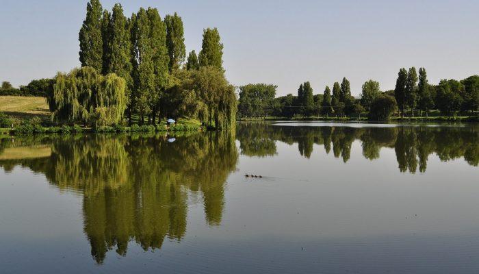 Pêcher à Saint Martin d'Auxigny
